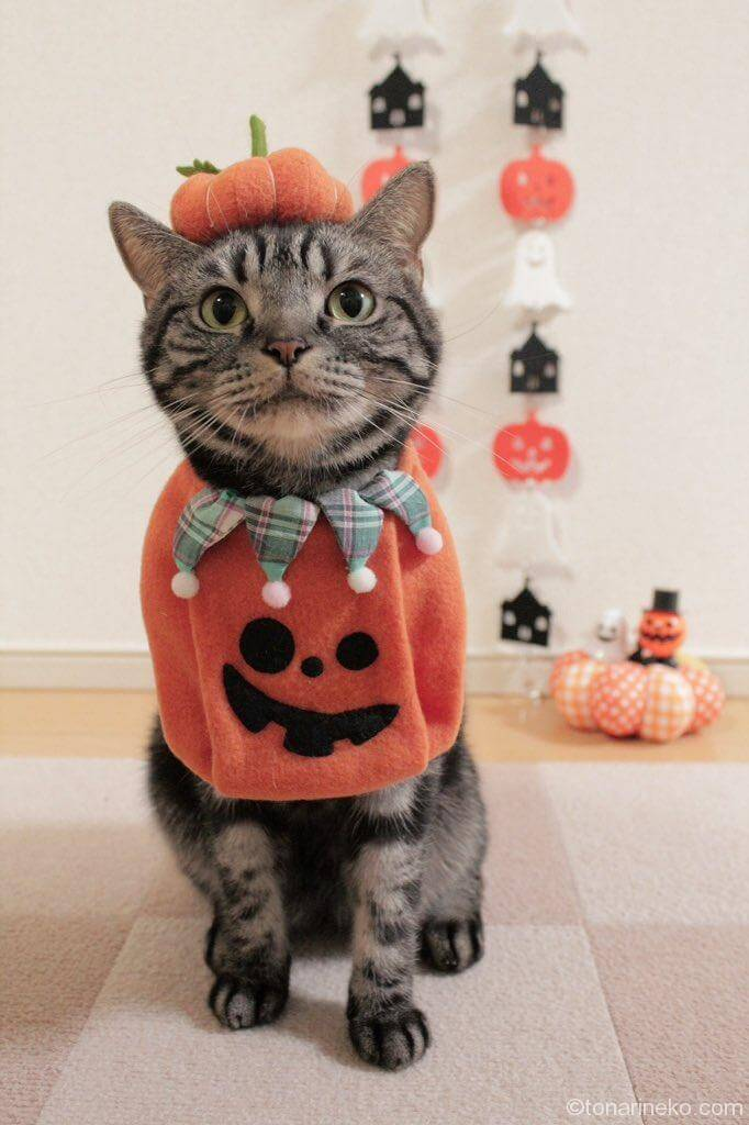 ハロウィン×猫