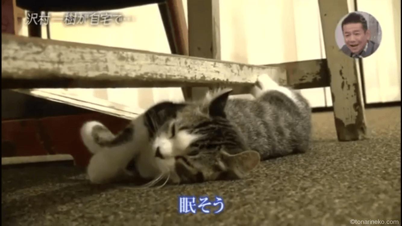 眠いまるのすけ