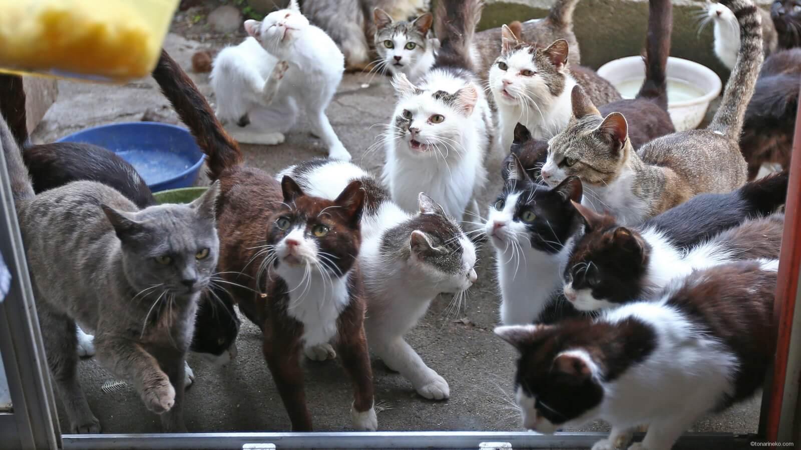 シックなネコたち