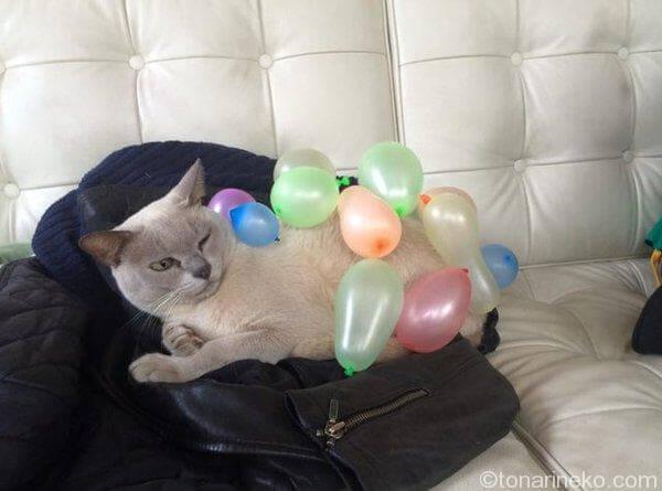 静電気猫2
