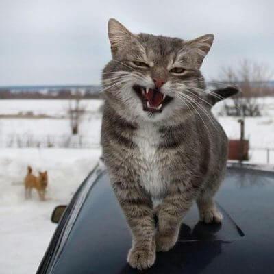 車と冬と猫
