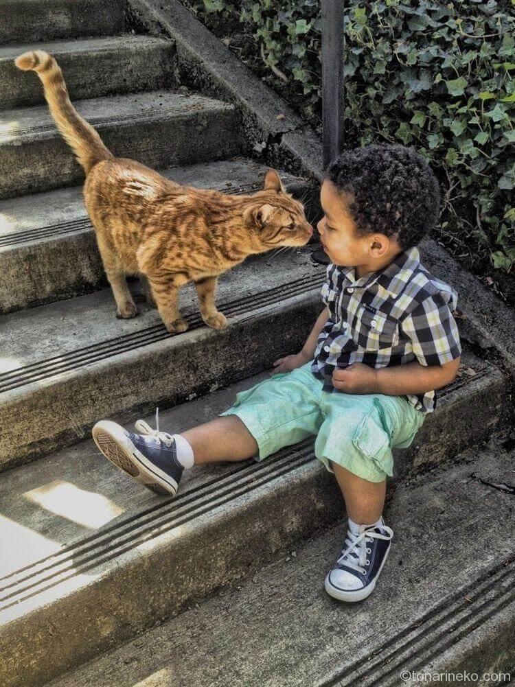 猫とコミュニケーション