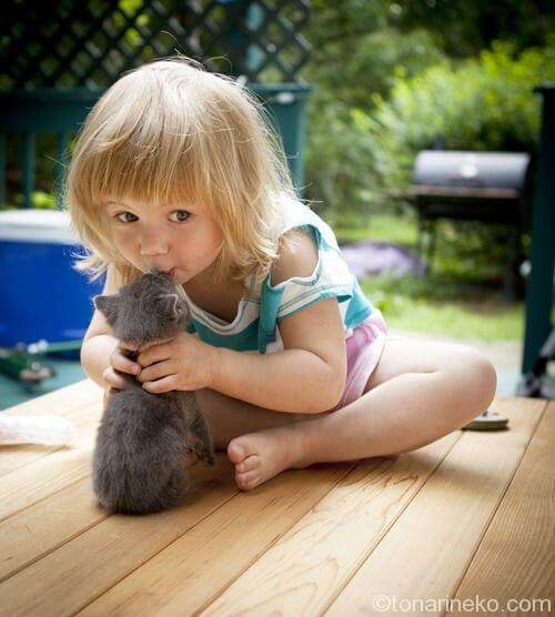 猫とちゅー