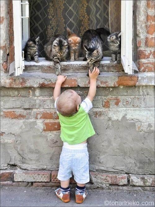 猫で生命について知る