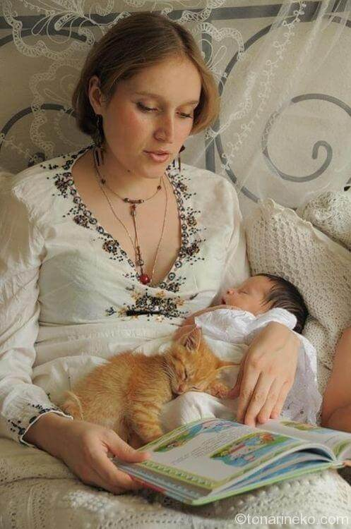 猫と赤ちゃんとお母さん