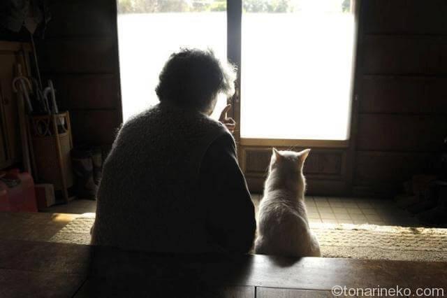 猫には飼い主さんしかいない