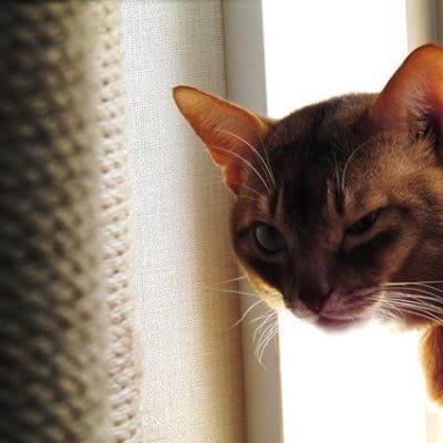 猫ウィンク
