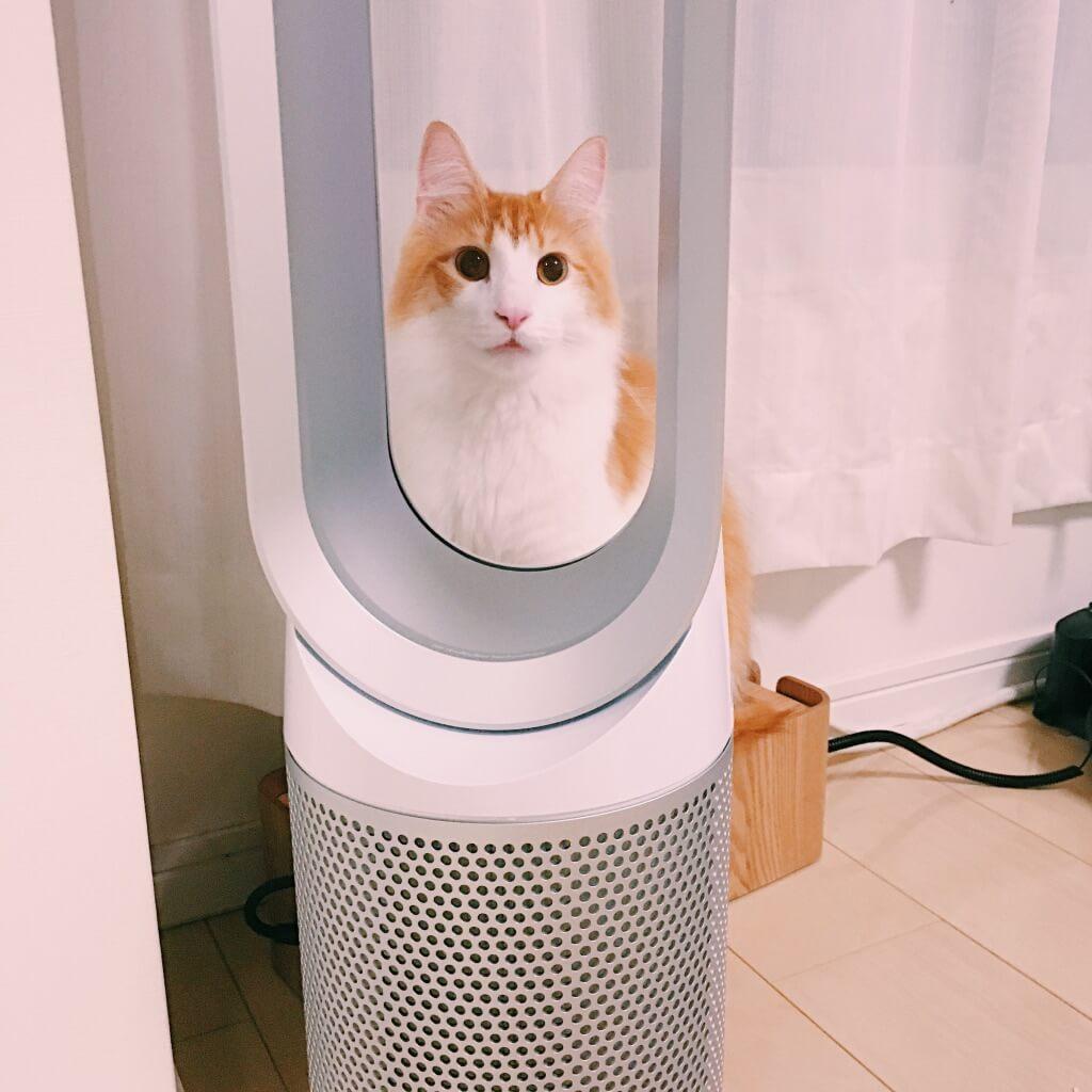 ダイソン扇風機と猫