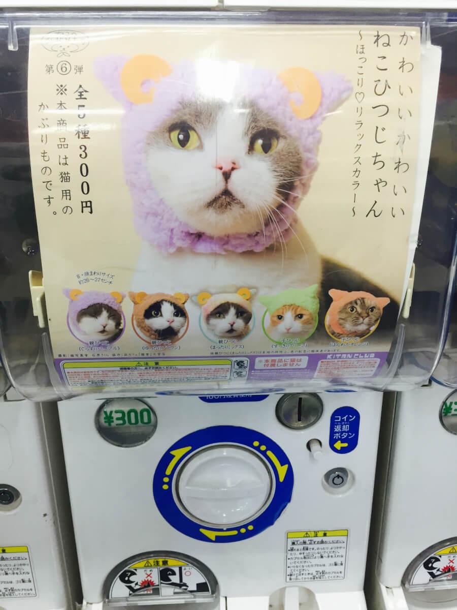 猫のかぶりものガチャ!