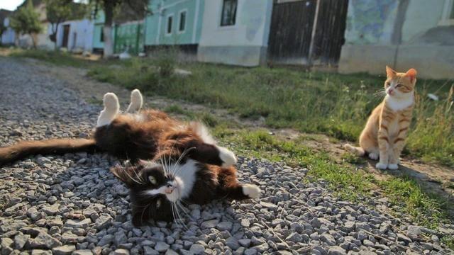 ネコ歩き1