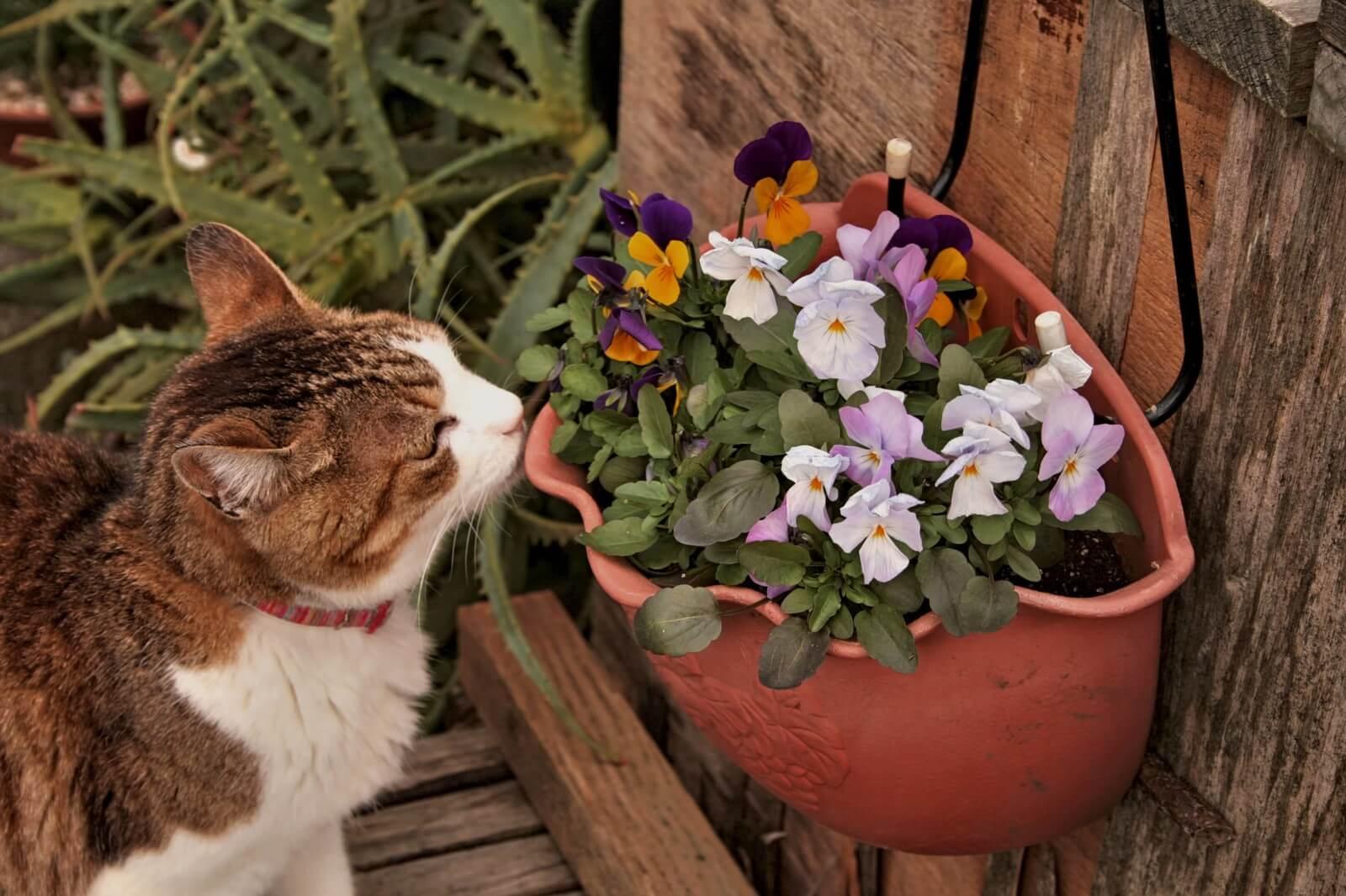 お花と猫2