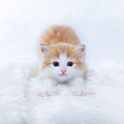 治した方がいい?猫が手を吸う癖が残る理由・おうちでできる対処法まとめ