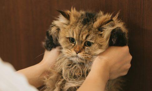 もじゃもじゃ猫