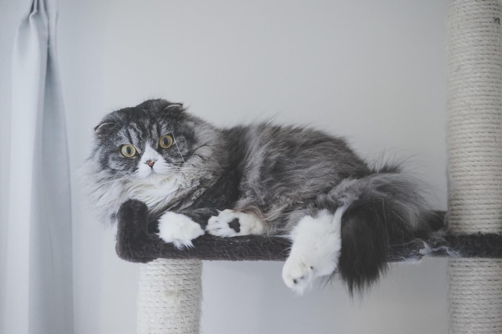 だらだら猫