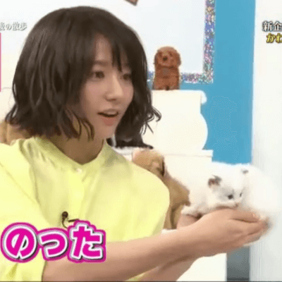 文乃さんと猫