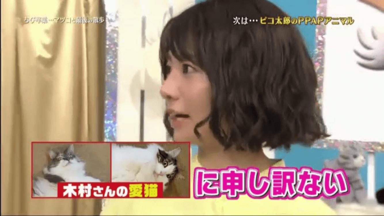 愛猫と文乃さん