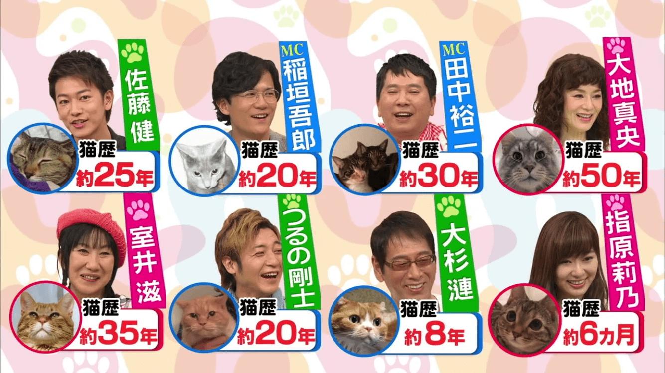猫歴20年!