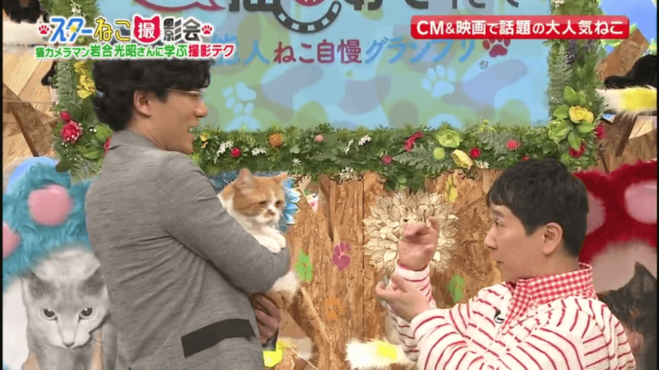 猫と稲垣さん