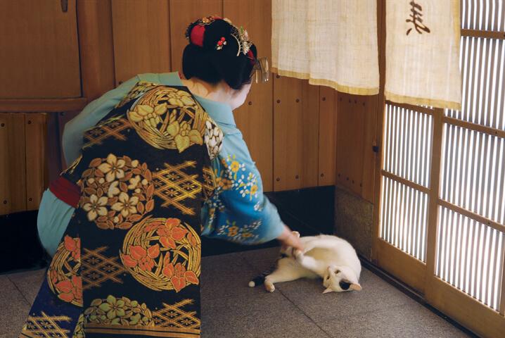 マイコさんと猫