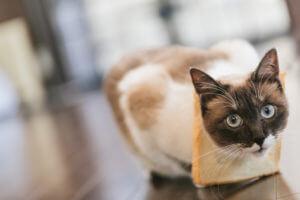 パンに入っちゃった猫