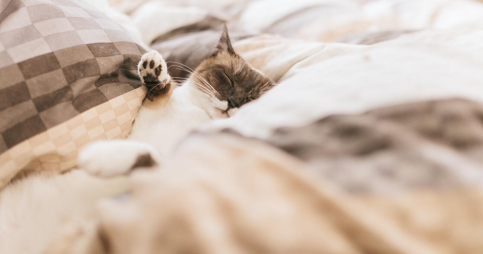 起きれない…