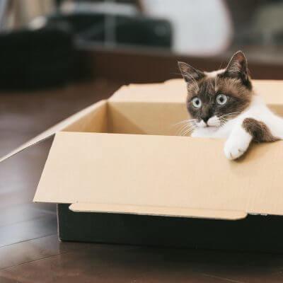 箱の中のシャム