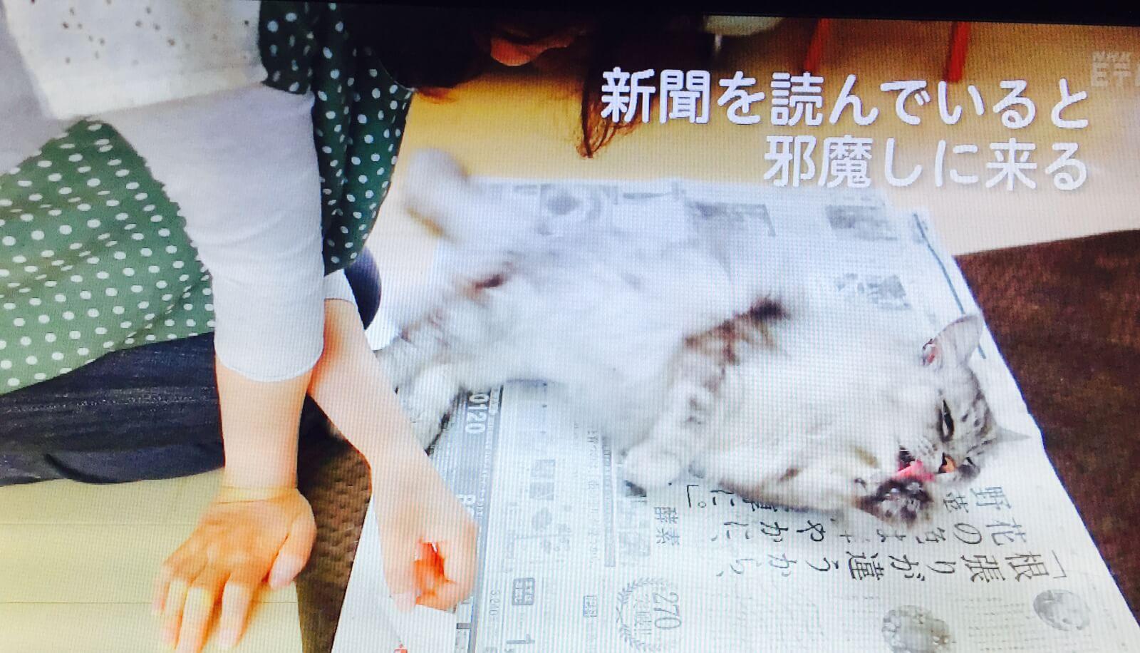新聞にのってくる猫