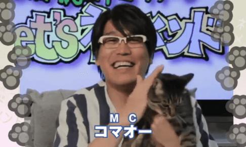 ピコ太郎猫
