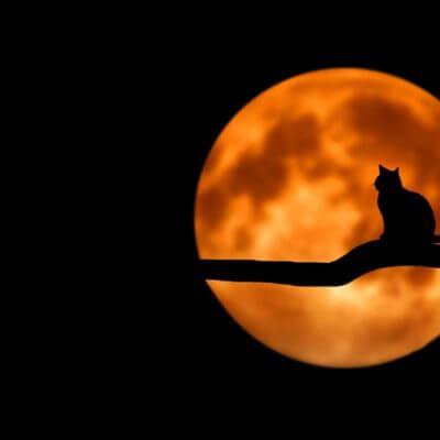 【猫は9つの命を持つ】って本当!?何故そのような伝説が生まれたのか?