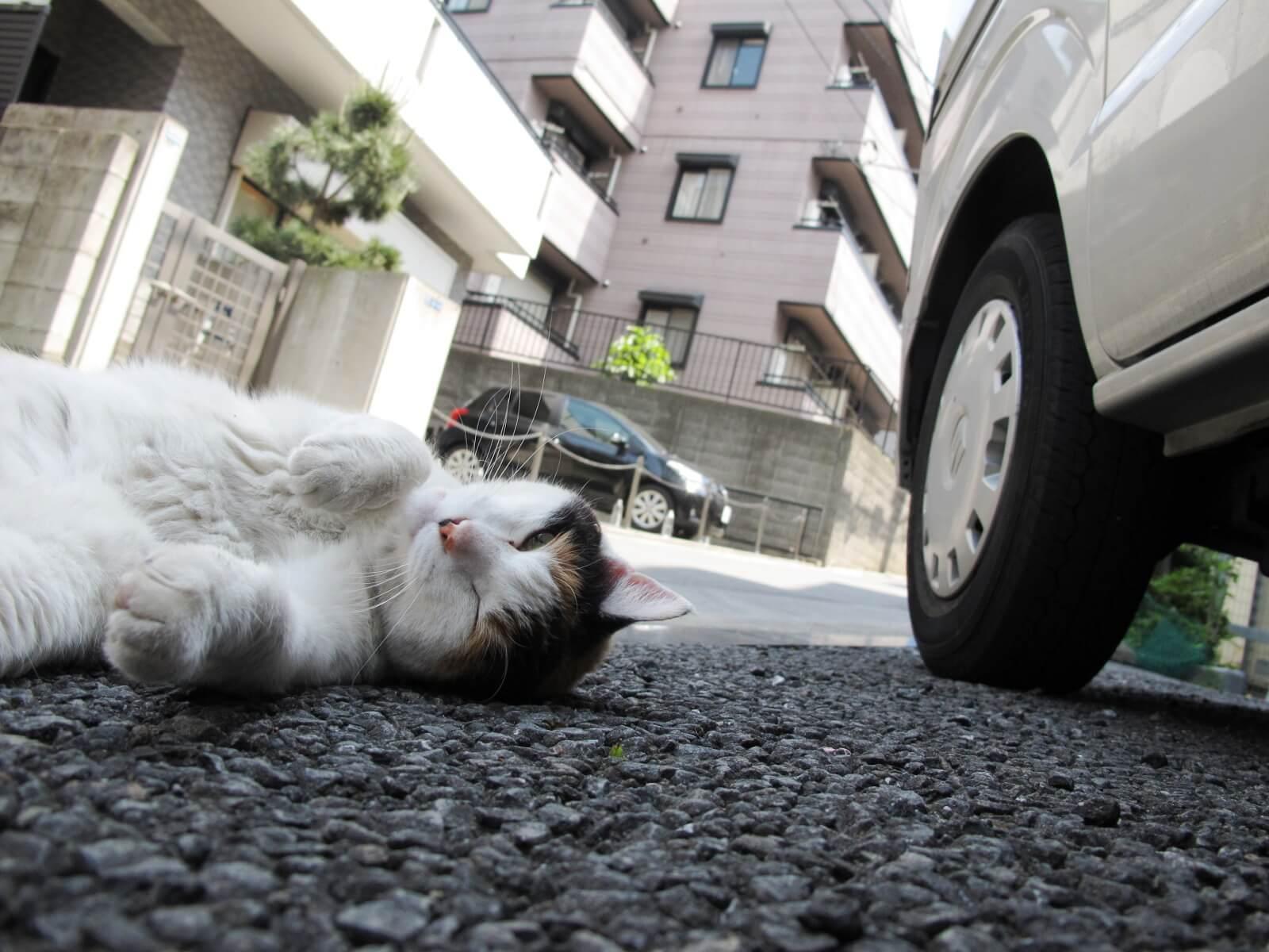 車のそばの猫
