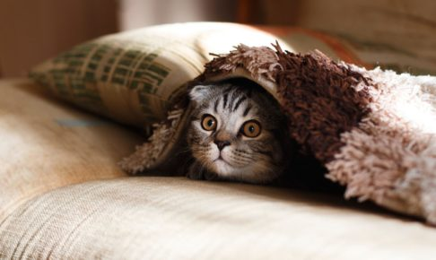 毛布に潜る猫