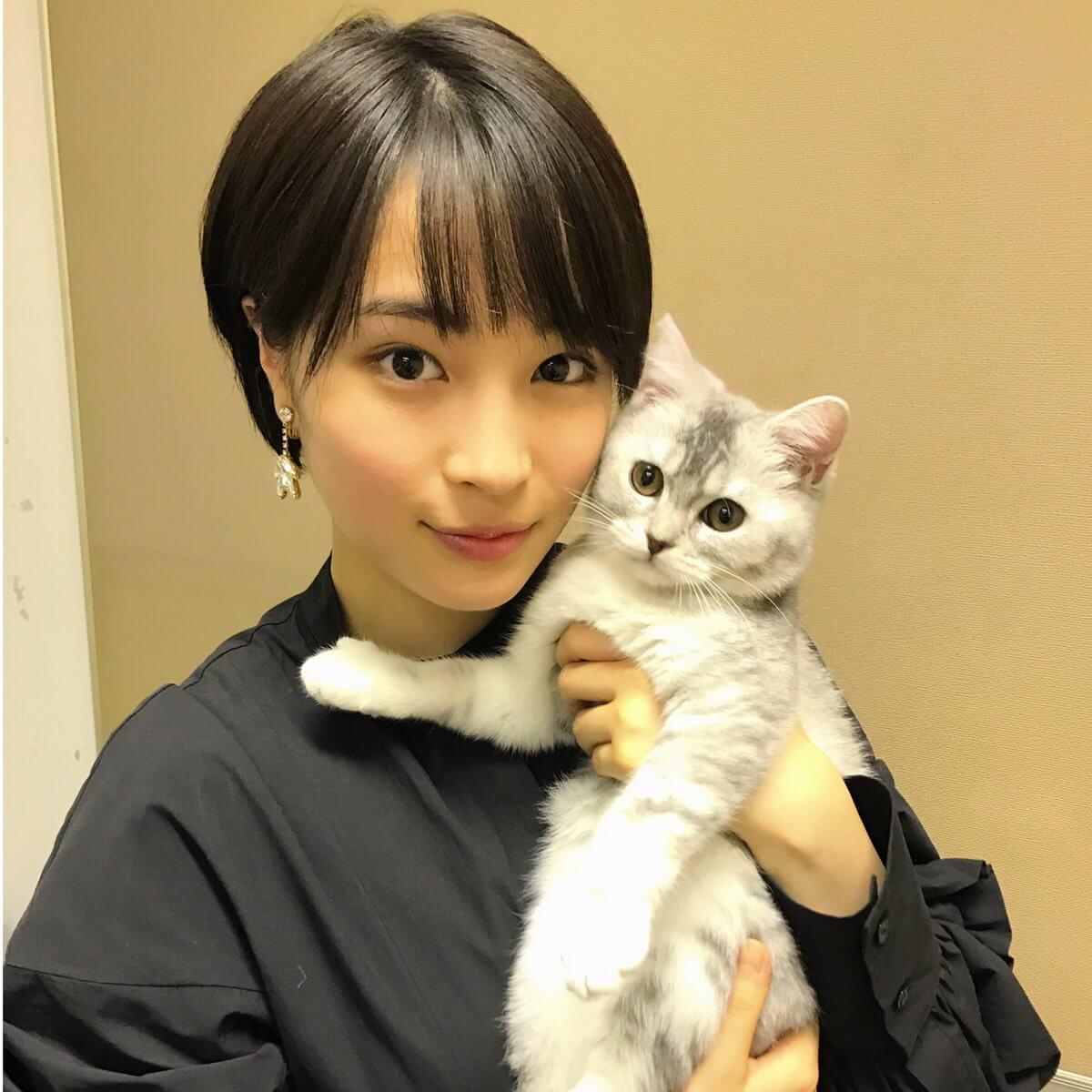 トップレート Anone 猫 壁紙猫かわいい