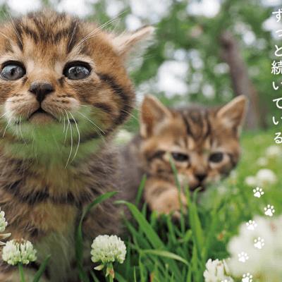 猫好きさん必見!!阿佐ヶ谷の小さなシアターでネコ映画祭がひっそりと開催されます!