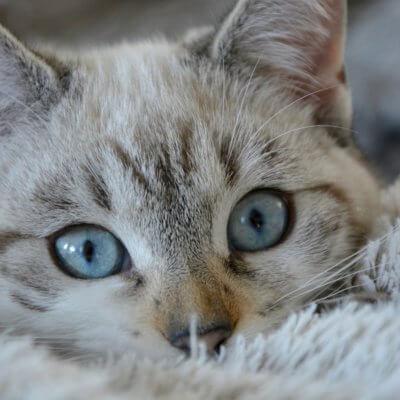 どうして猫は飼い主さんと一緒に寝たがるの?その理由と気持ちを調べてみた♪