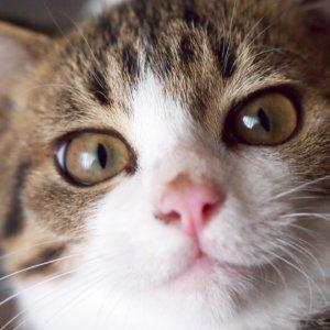 里親募集中の保護猫の未来をひらきたい!譲渡会開催までを徹底リポート☆