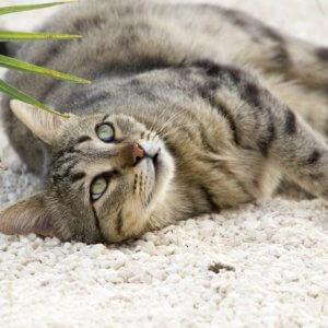 賛否両論!広島の無人島「来島」へ保護猫パークをつくる計画とは?