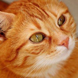 愛猫を長生きさせたい…改めて猫の寿命について考えてみた!