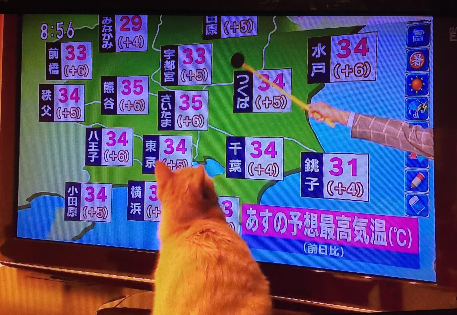 平井さんと猫2