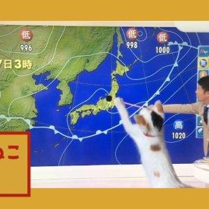 Eテレ「ねこねこ55」気まぐれに放送中♪11月10日にたまの巻が放送しました♡