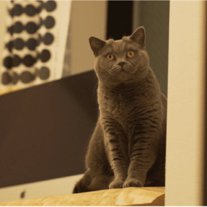 「猫の日」はNHKを観よう!NHKドキュメンタリーは猫の番組がたくさん♡