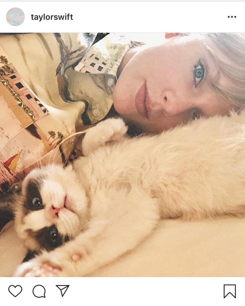 歌手・テイラー・スウィフトが新しい子猫「ベンジャミン」を飼い始めました♡新曲MVにも登場!