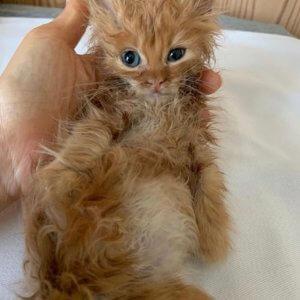 女優・石田ゆり子さんが子猫の「ばぶお」を保護!ばぶおが治療中の「真菌」とは?