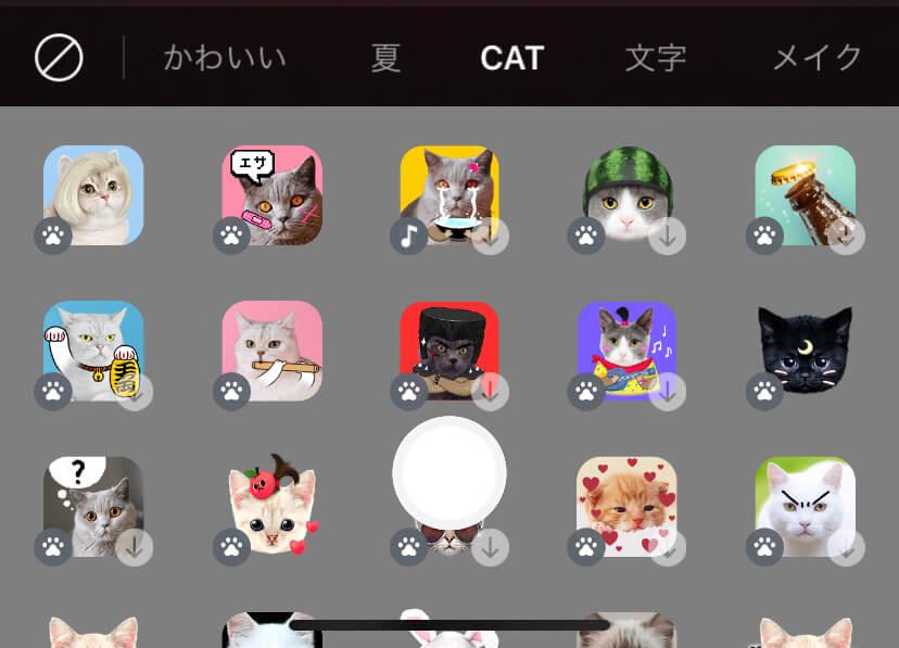 catモード